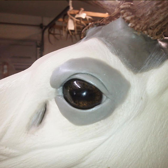Eyes and head rebuild with Apoxie Sculpt Whitetail