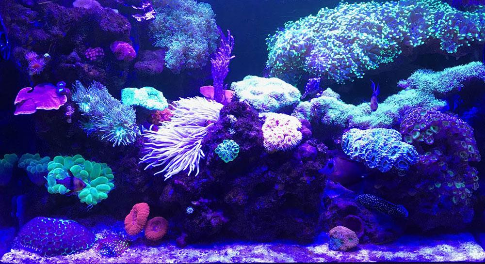 aquarium-front